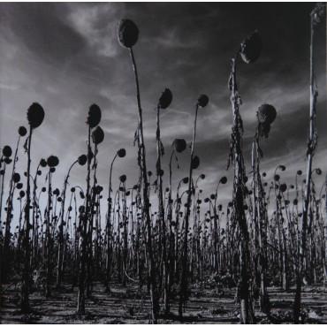 Dead Can Dance - Anastasis // 2LP neufs